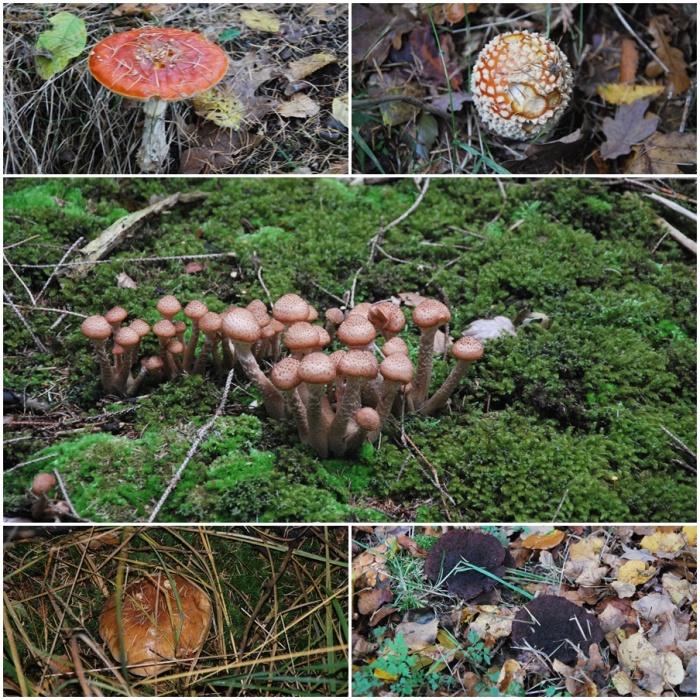 paddenstoelen1